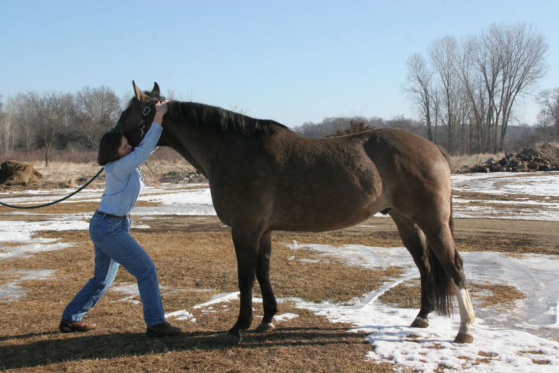 horse-slider